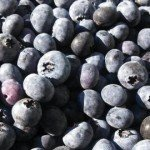 Bowerman-Blueberries-Facebook-Page-2-300x270