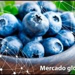 Mercadoglobalsp